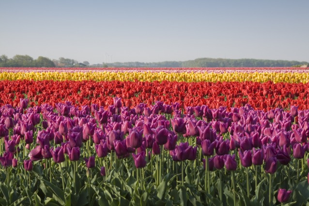 Best Spring Trips for 2013