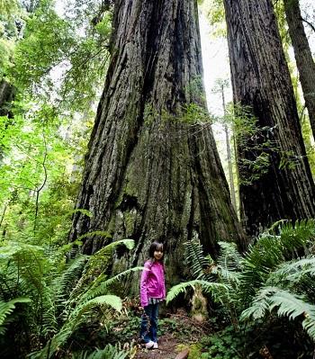 The Write Way to Travel | Three Top Locations To Hug a Tree!